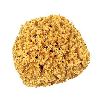 Natuur spons ca 14cm